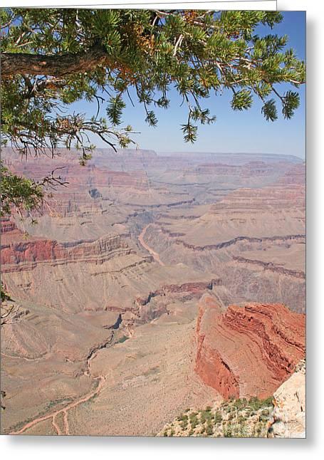 Colorado River Grand Canyon National Park Usa Arizona Greeting Card by Audrey Campion