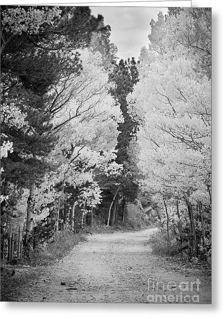 Colorado Rocky Mountain Aspen Road Portrait Bw Greeting Card by James BO  Insogna