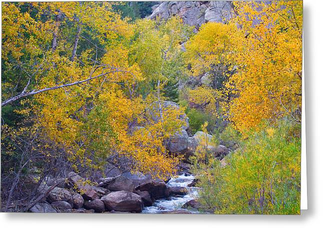 Colorado Rocky Mountain Autumn Canyon View Greeting Card