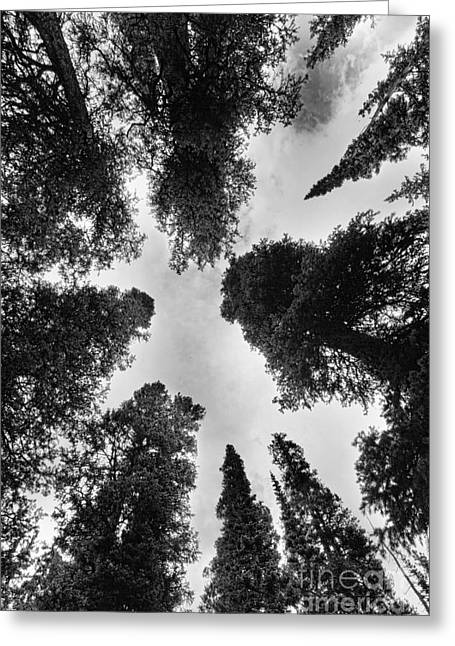 Colorado Rocky Mountain Forest Sky Bw Greeting Card by James BO  Insogna