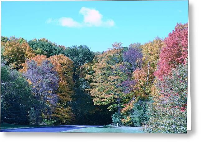 Colored Trees Greeting Card by Dyana Rzentkowski