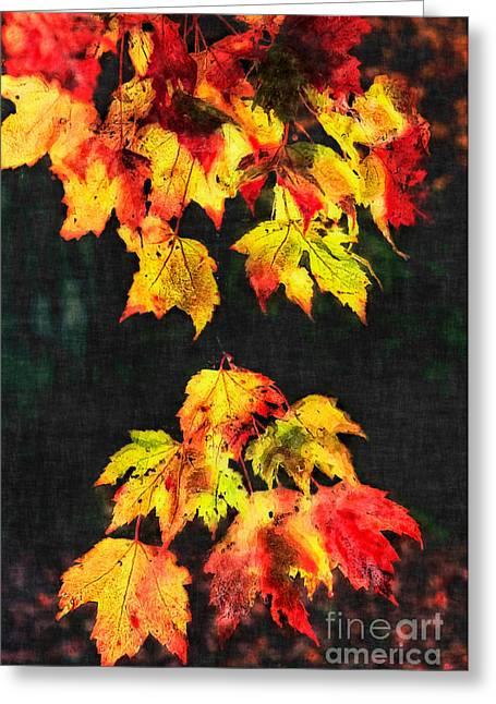 Colorful Autumn Leaves IIi Greeting Card by Dan Carmichael