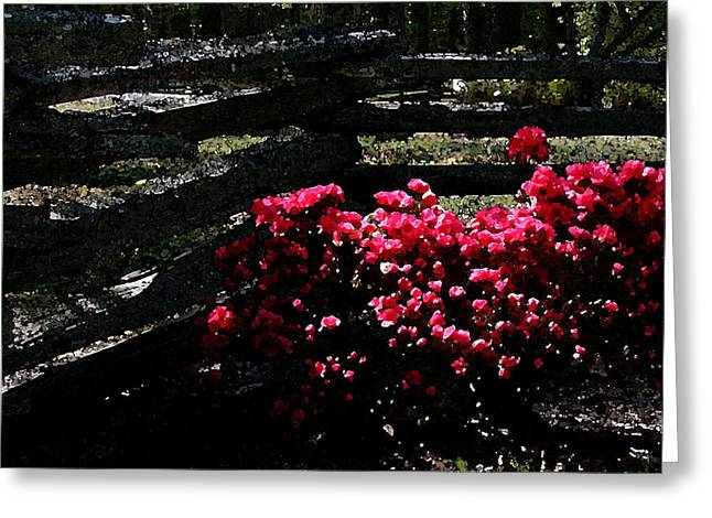 Colorful Azaleas Greeting Card