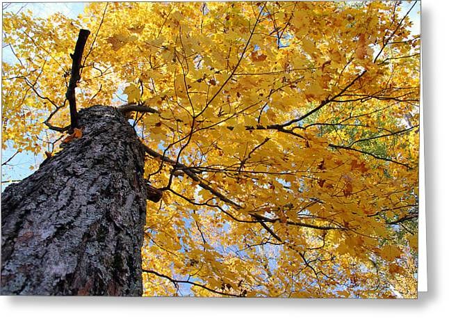 Colorful Canopy 130 Greeting Card by Mark J Seefeldt