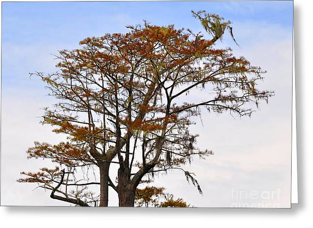 Colorful Cypress Greeting Card by Al Powell Photography USA