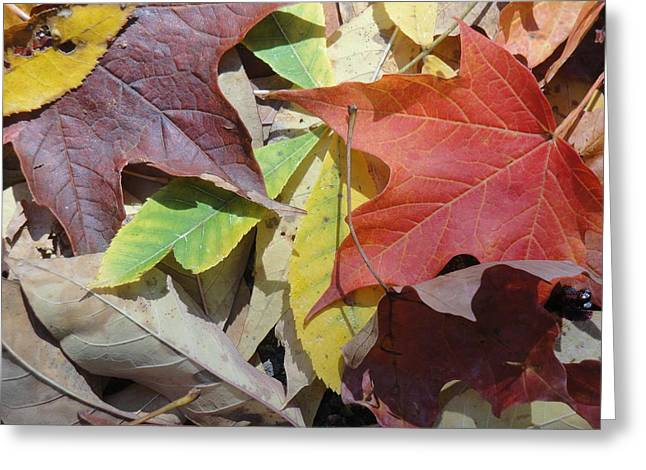 Colorful Fall Leaves Greeting Card by Kathy Lyon-Smith