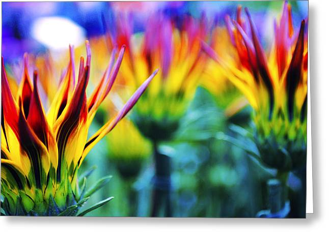 Colorful Flowers Together Greeting Card by Sumit Mehndiratta