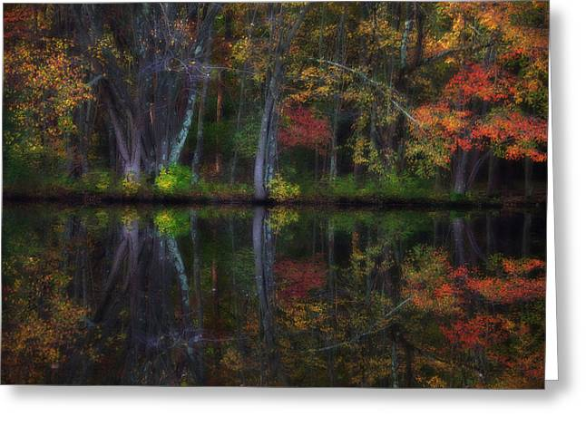 Colorful Forest Greeting Card by Karol Livote