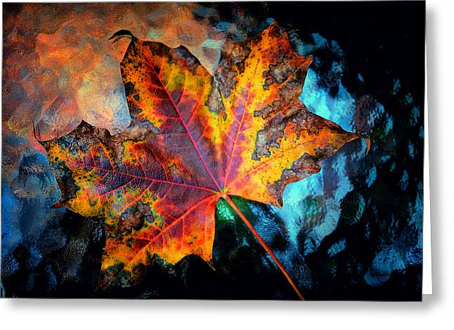 Colorful Maple 2012 Greeting Card
