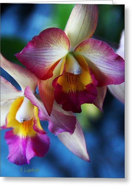Greeting Card featuring the photograph Colorful Orchids by Kerri Ligatich