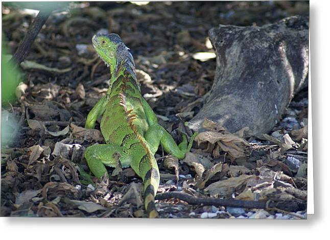 Greeting Card featuring the photograph Colorful Reptile by Jerry Cahill
