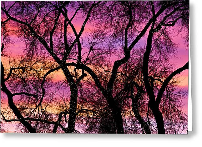 Colorful Silhouetted Trees 21 Greeting Card by James BO  Insogna