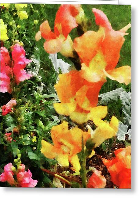 Colorful Snapdragons Greeting Card by Susan Savad