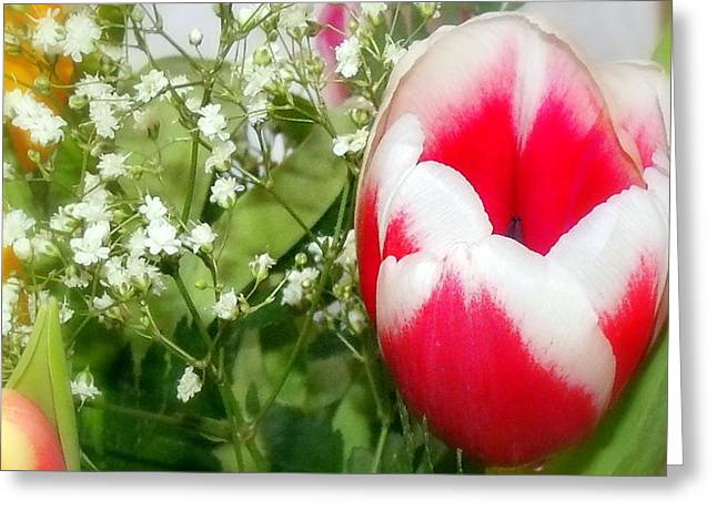 Colorful Tulip Greeting Card by Jose Lopez