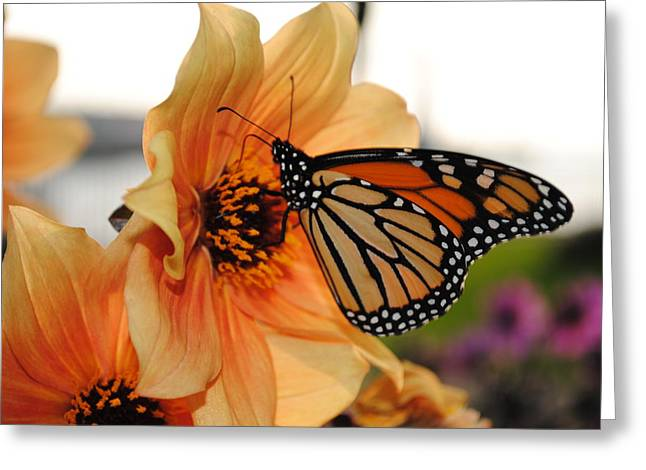 Greeting Card featuring the photograph Colors In Sync by Michael Frank Jr