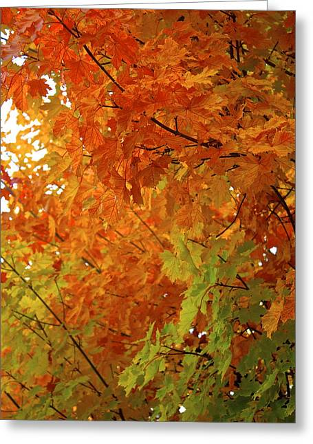 Greeting Card featuring the photograph Colors Of Autumn by Sylvia Hart