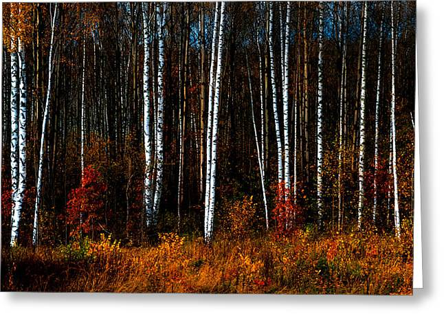 Colors Of Fall Greeting Card by Jenny Rainbow