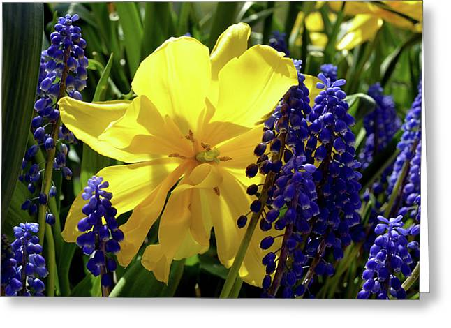 Greeting Card featuring the photograph Colors Of Spring by Pravine Chester