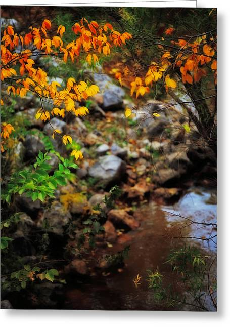 Colors On The Creek Greeting Card by Toni Hopper