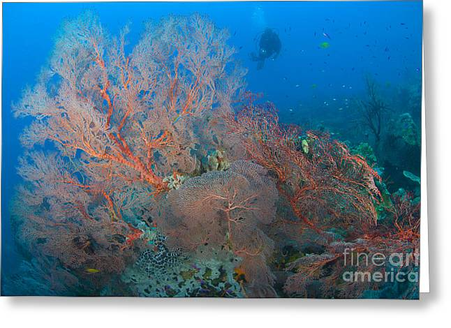 Colourful Sea Fan Seascape, Papua New Greeting Card by Steve Jones