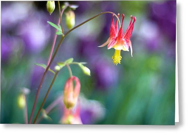 Columbine Flower Greeting Card by Laura George