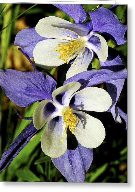 Columbine Twins Greeting Card