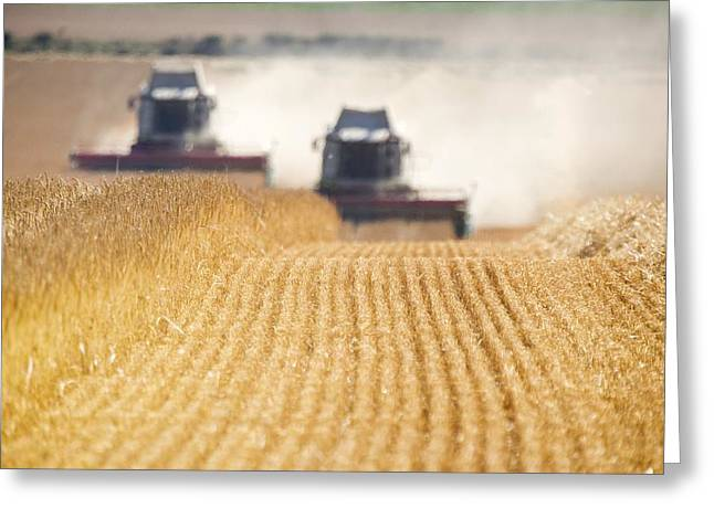 Combines Harvesting Field, North Greeting Card by John Short