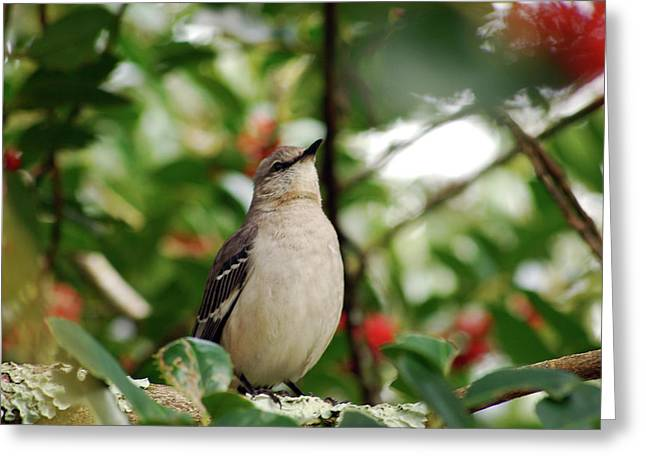 Common Bushtit Greeting Card