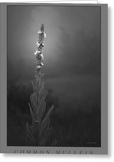 Common Mullein Greeting Card by Ron Jones
