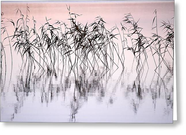 Common Reeds Greeting Card
