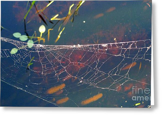 Greeting Card featuring the photograph Complexity Of The Web by Nina Prommer