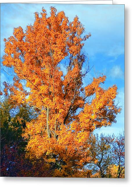 Complimentary Colors Greeting Card by Michael Putnam