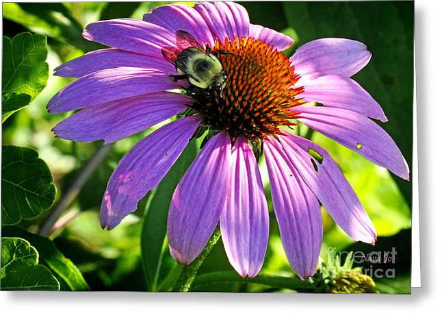 Greeting Card featuring the photograph Cone Bee by Nava Thompson