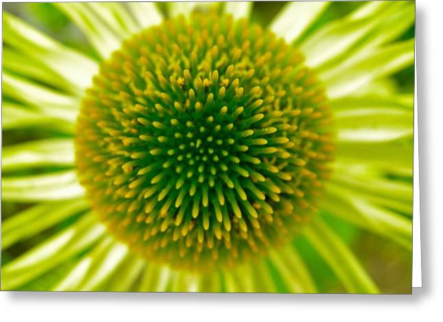 Cone Of The Cone In Lime Greeting Card by Randy Rosenberger