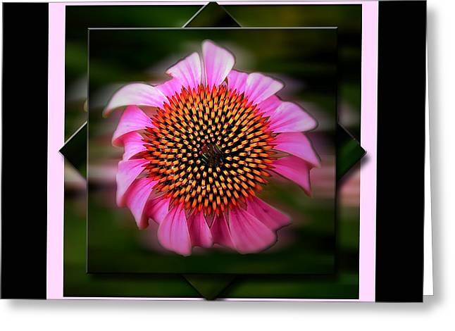 Coneflower Geometric Greeting Card by Sue Stefanowicz