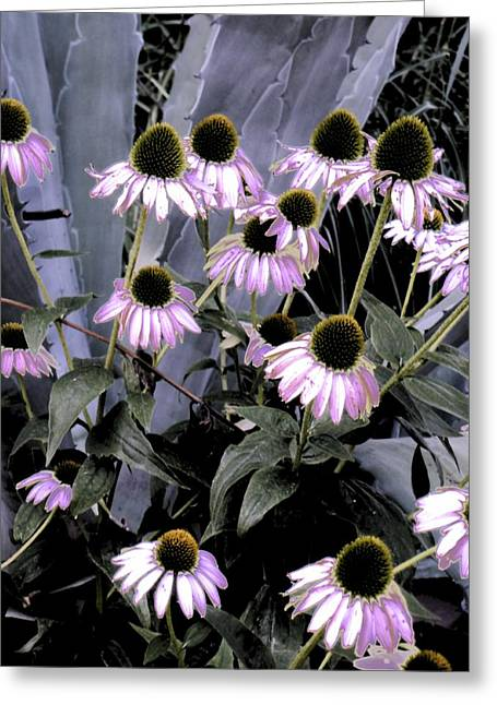 Coneflowers In Abstract Greeting Card by Beth Akerman