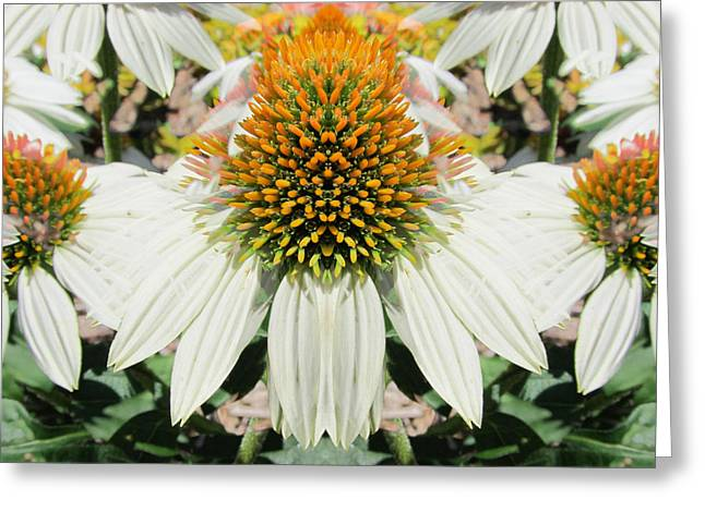 Coneflowers Greeting Card by Michele Caporaso