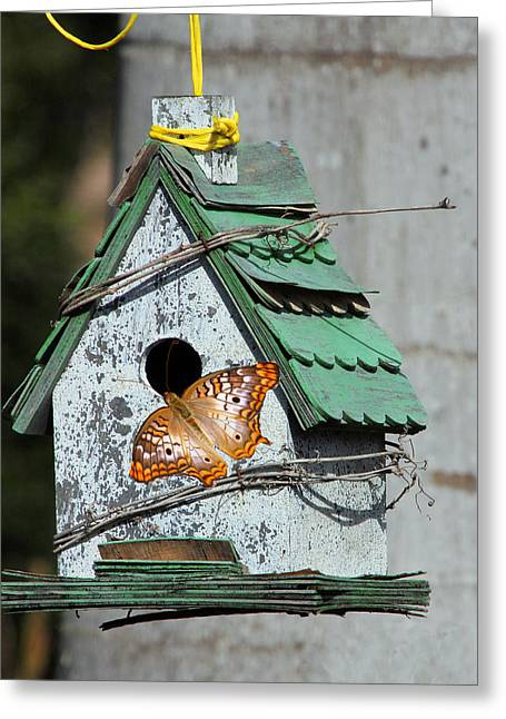 Confused Butterfly Greeting Card by Rosalie Scanlon