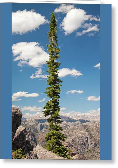 Conifer Tree White Clouds Blue Sky Greeting Card by John Stephens