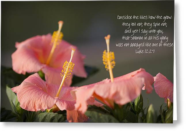 Consider The Lilies How They Grow Greeting Card by Kathy Clark