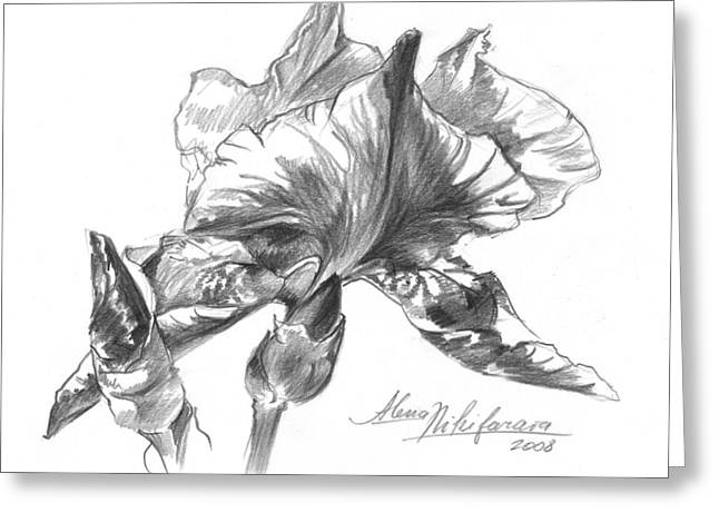 Conte Pencil Sketch Of Iris Greeting Card