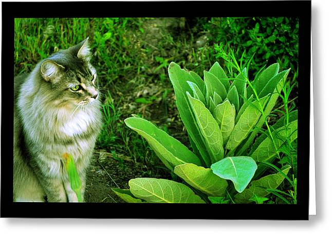 Greeting Card featuring the photograph Contemplating The Nature Of Mullein by Susanne Still