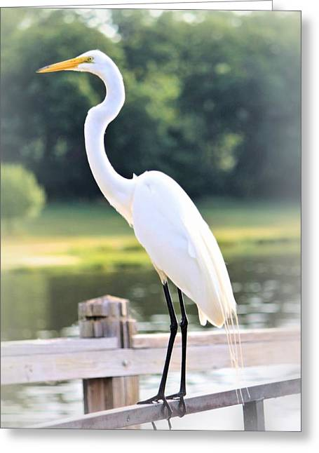 Contemplation  Greeting Card by Elizabeth Budd