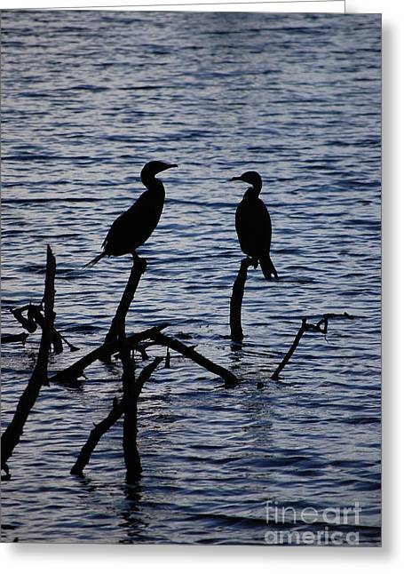 Contemplation Greeting Card by Robert Meanor