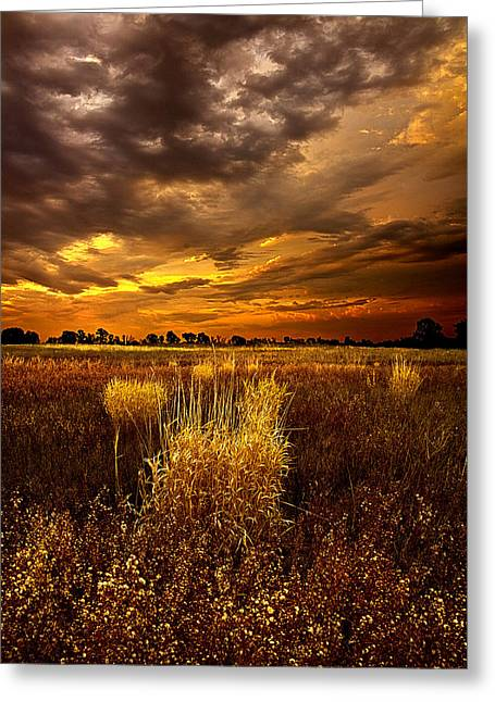 Continuance Greeting Card by Phil Koch