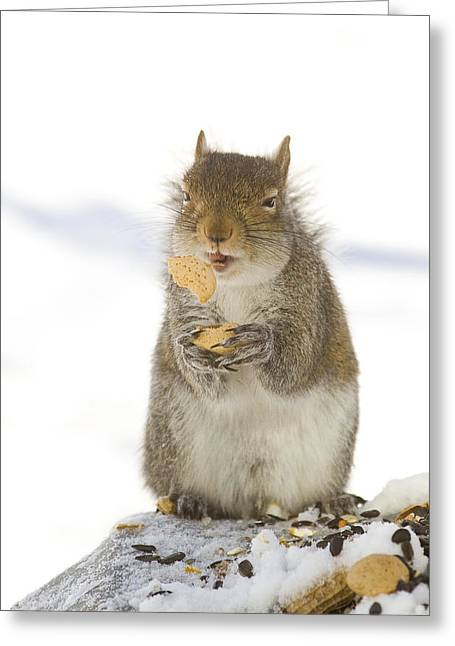 Cookie Squirrel Greeting Card