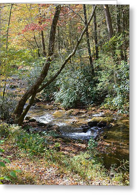 Cool Creek Greeting Card by Margaret Palmer