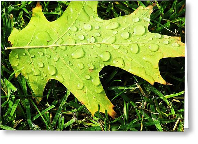 Cool Morning Dew Greeting Card