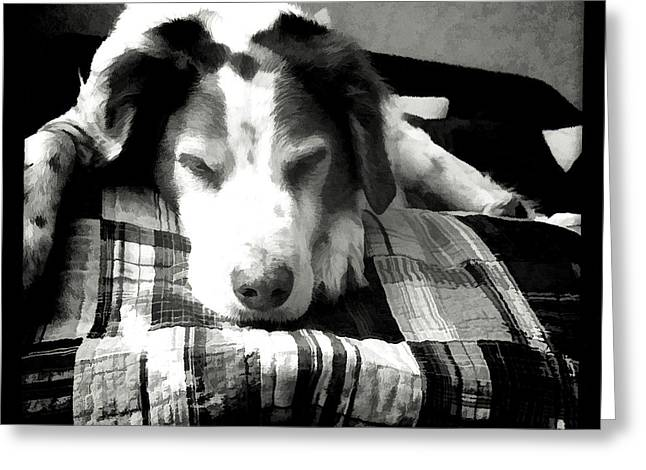 Copper Sleeps Greeting Card by Christine Segalas
