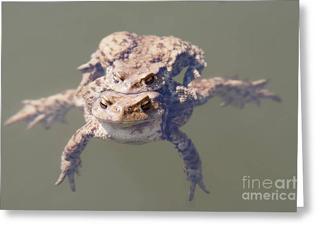 Copulation Of The Frogs Greeting Card by Michal Boubin